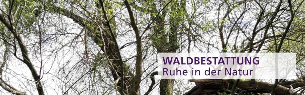 GBI-Wald2000_625-1